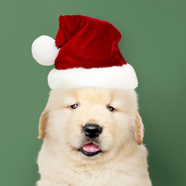 Portret van een golden retrieverpuppy die een kerstmanhoed dragen Gratis Foto