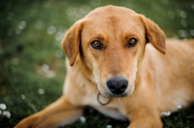 Portret van een hond die camera bekijkt Premium Foto