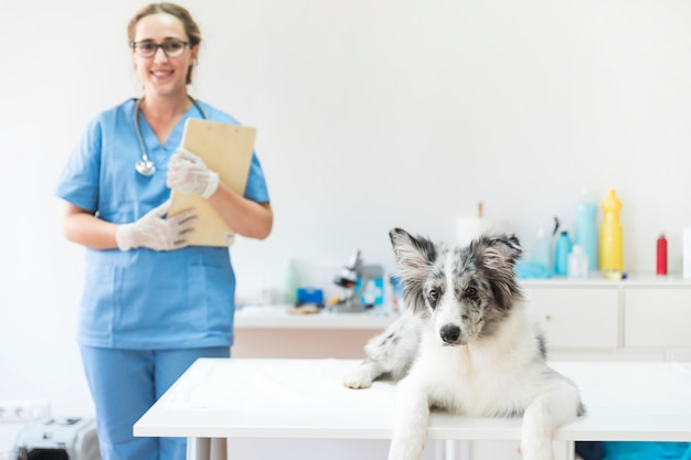 Portret van een hond die op lijst in kliniek met vrouwelijke dierenarts ligt die zich op achtergrond bevindt Gratis Foto