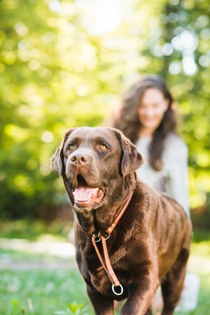 Portret van een schattige hond in park Gratis Foto