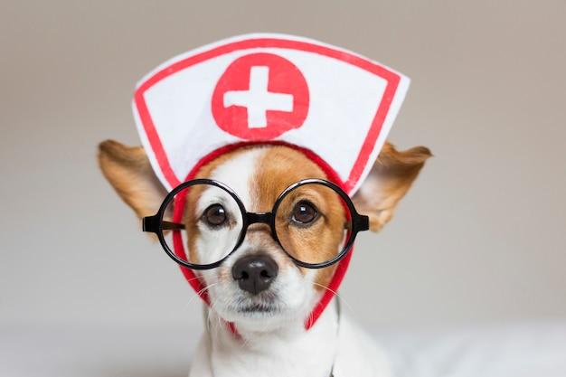 Portret van een schattige jonge kleine hond zittend op bed. stethoscoop en bril dragen. hij ziet eruit als een arts of een dierenarts. Premium Foto