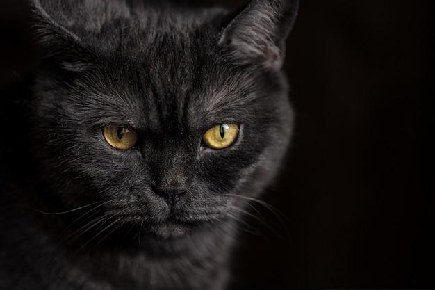 Portret van kat met grote gele ogen Premium Foto