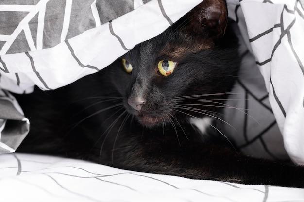 Portret van schattige harige kat thuis Premium Foto