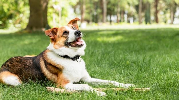 Portret van schattige hond genieten van tijd buiten Premium Foto