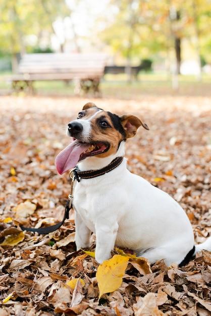 Portret van schattige hond in het park Gratis Foto