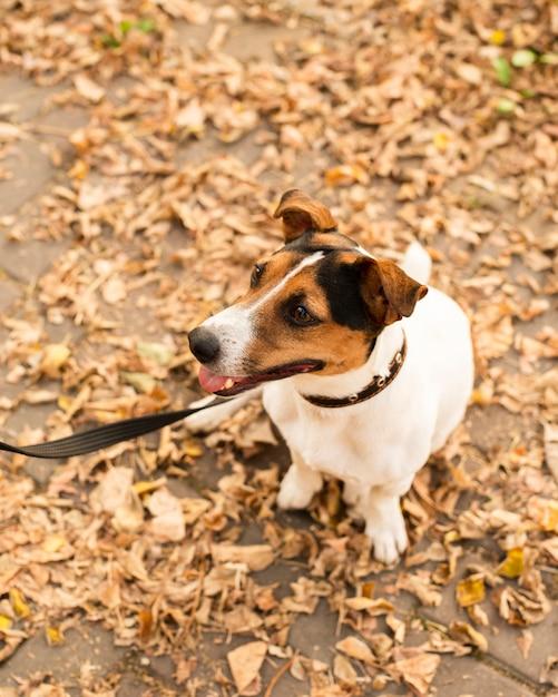 Portret van schattige kleine hond buitenshuis Gratis Foto