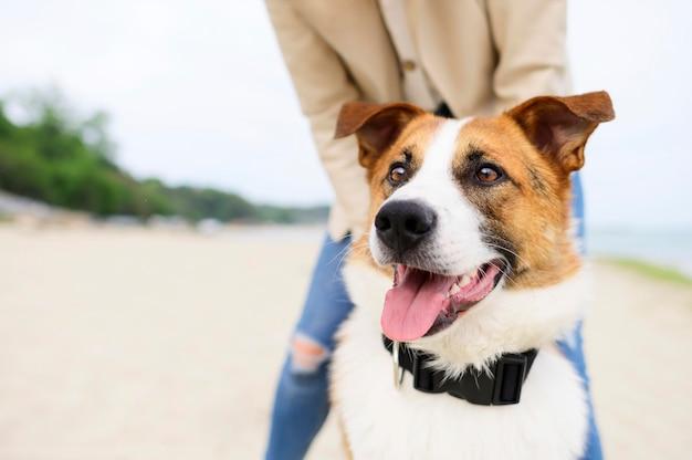 Portret van schattige kleine hond genieten van de natuur Premium Foto