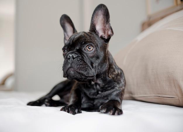 Portret van schattige kleine hondje Gratis Foto