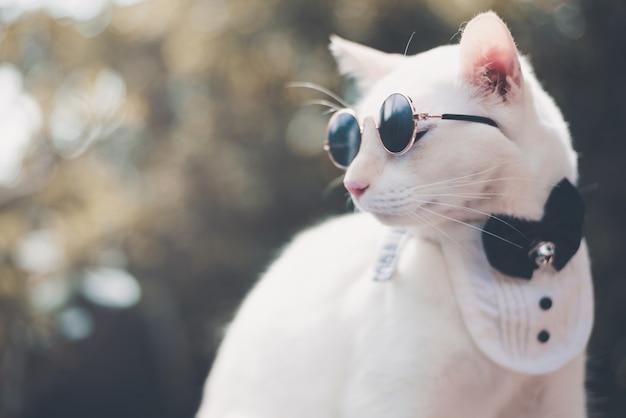 Portret van tuxedo white cat dragen van een zonnebril en pak, dier mode concept. Premium Foto