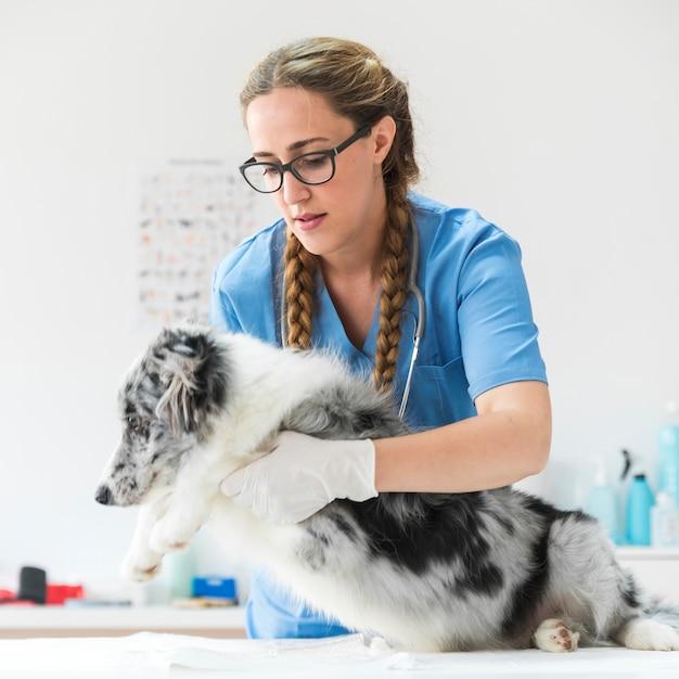 Portret van vrouwelijke dierenarts die zieke hond onderzoeken die op lijst in kliniek liggen Gratis Foto