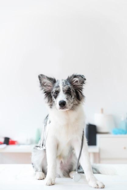 Portret van vrouwelijke dierenarts met stethoscoop op witte tafel Gratis Foto