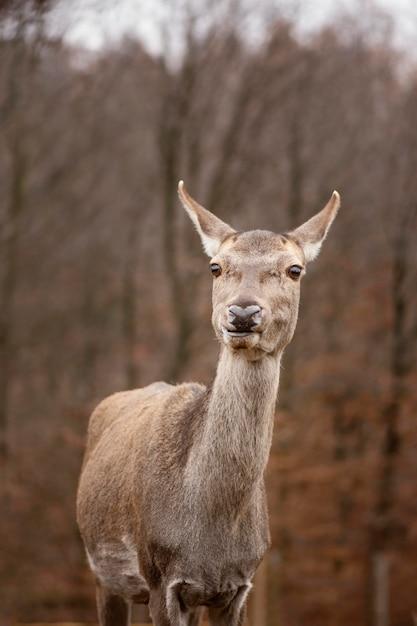 Portret van wilde herten in het bos Gratis Foto