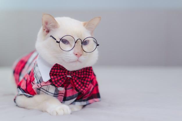 Portret van witte kat dragen van een bril en een strikje Premium Foto