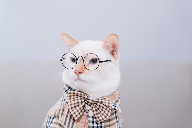 Portret van witte kat dragen van een bril Premium Foto
