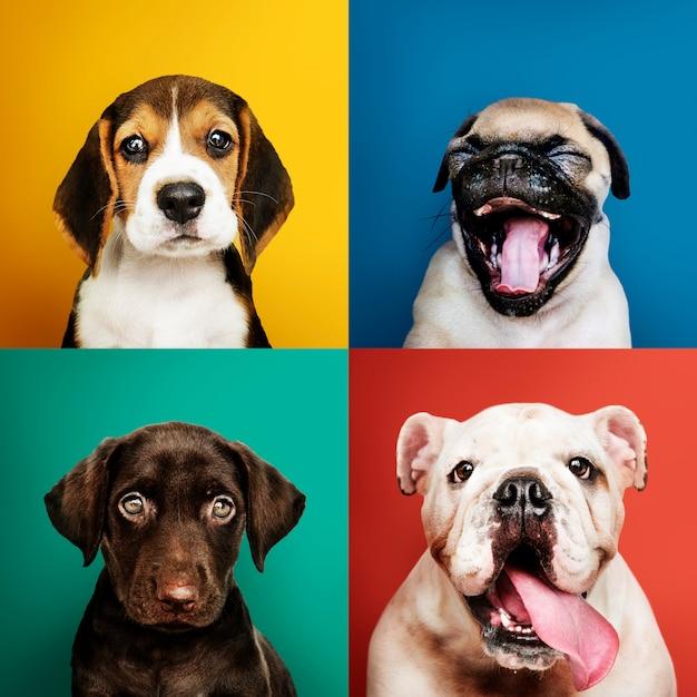 Portretcollectie van schattige puppy's Gratis Foto