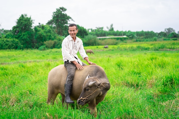 Prachinburi, thailand - 11 augustus 2019: thaise boer rijdt met zijn buffel op groen grasveld in platteland Premium Foto