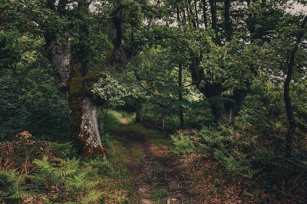 Prachtig bos met groene tinten in baskenland Premium Foto