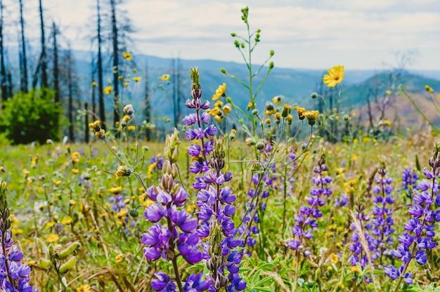 Prachtig groen veld met lila bloemen en dunne hoge bomen Gratis Foto