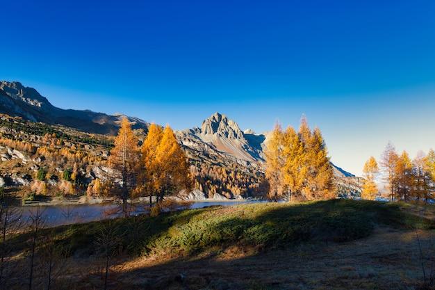 Prachtig herfstlandschap in de engadin-vallei in de buurt van sankt moritz. zwitserse alpen Premium Foto