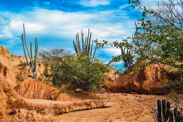 Prachtig landschap van de tatacoa-woestijn, colombia met exotische wilde planten op de rode rotsen Gratis Foto