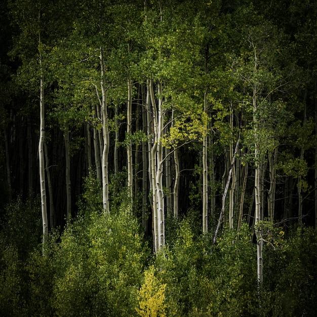 Prachtig landschap van een bos vol hoge bomen en andere soorten planten Gratis Foto