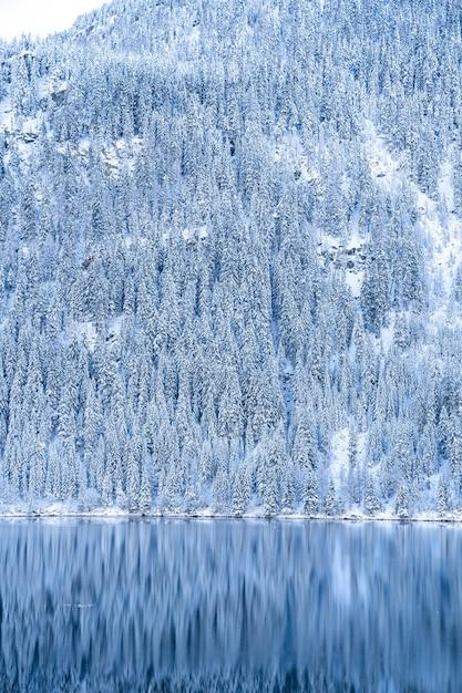 Prachtig landschap van veel bomen bedekt met sneeuw in de alpen weerspiegelt in een meer Gratis Foto