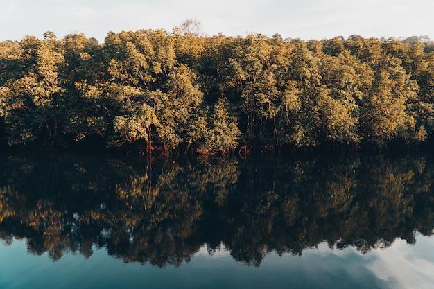 Prachtig meer en mangrovebos. Premium Foto