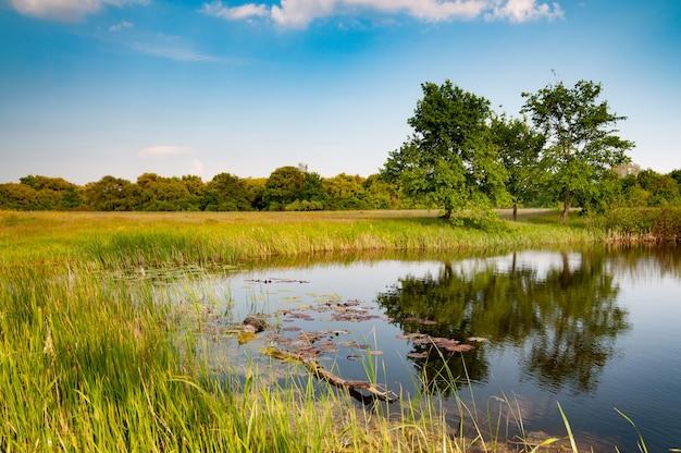 Prachtig mooi uitzicht op het meer in de buurt van het bos en de velden tegen de blauwe lucht op een warme zonnige zomerdag Premium Foto