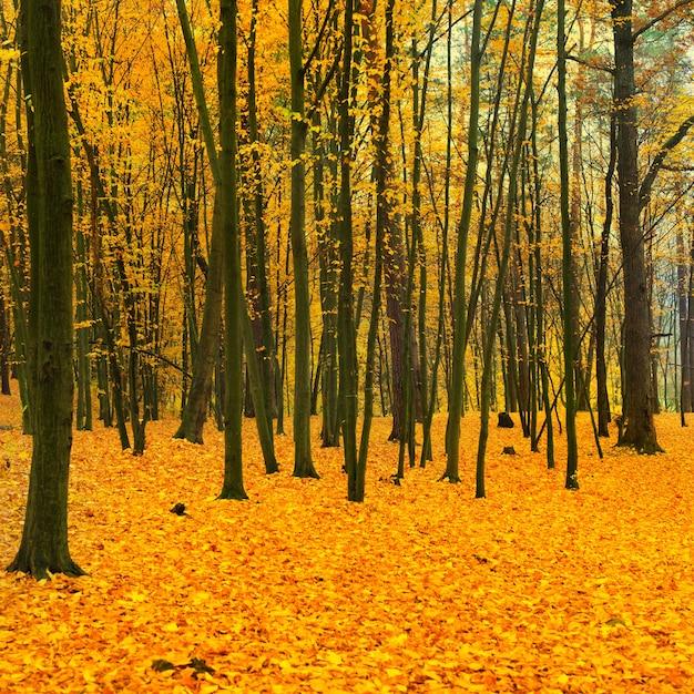 Prachtig omgevallen park in het bos met gele en rode bomen Premium Foto