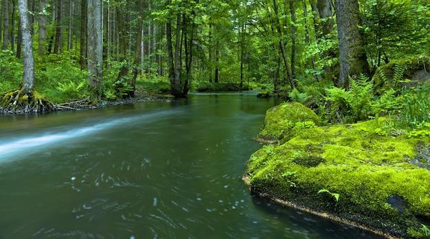 Prachtig panoramisch shot van een rivier omgeven door hoge bomen in een bos Gratis Foto
