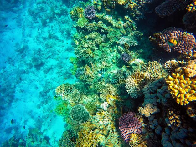 Prachtig prachtig uitzicht op koraalrif en vissen in de rode zee Premium Foto