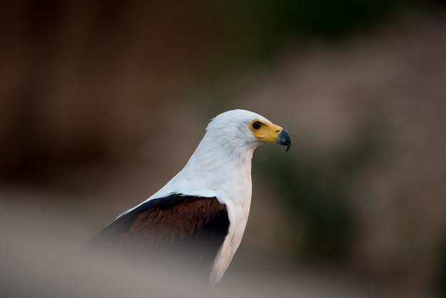 Prachtig schot van een adelaar Gratis Foto
