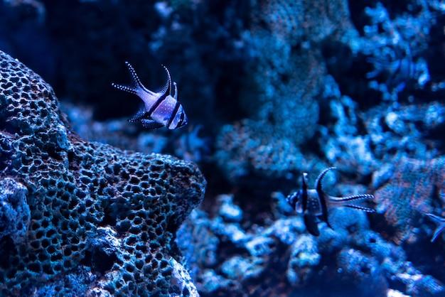 Prachtig schot van koralen en vissen onder de helderblauwe oceaan Gratis Foto