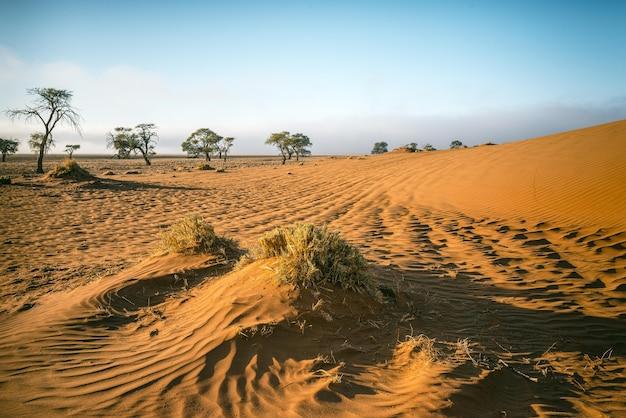 Prachtig shot van een namib woestijn in afrika met een strakblauwe lucht Gratis Foto