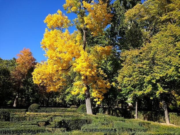 Prachtig shot van het park vol bomen en een heldere lucht op de achtergrond in aranjuez, spanje. Gratis Foto
