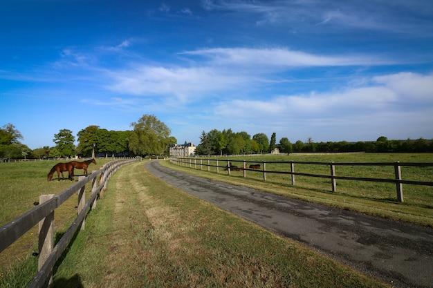 Prachtig shot van paarden die rondhangen op de ranch op het platteland Gratis Foto