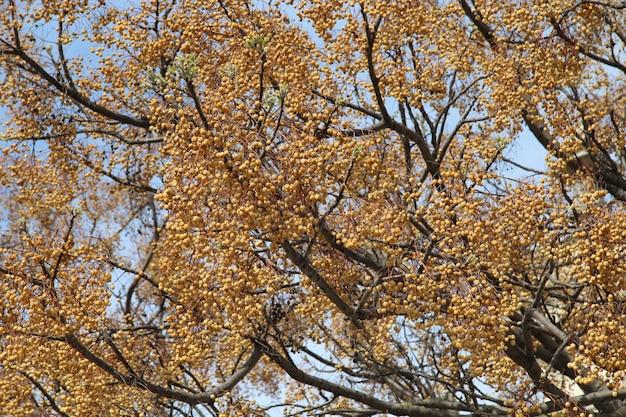 Prachtig uitzicht op de kleine oranje vruchten op een grote boom onder de blauwe hemel Gratis Foto