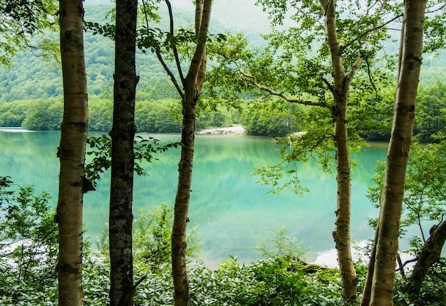 Prachtig uitzicht op de stroom stroomt naar beneden door het bos op de berg in kamikochi, japan Premium Foto
