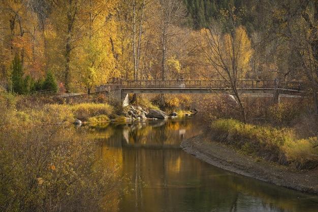 Prachtig uitzicht op een brug over de rivier met geel en bruin loofbomen Gratis Foto