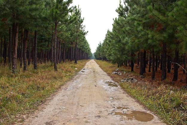 Prachtig uitzicht op een modderige weg die door de verbazingwekkende hoge bomen loopt Gratis Foto