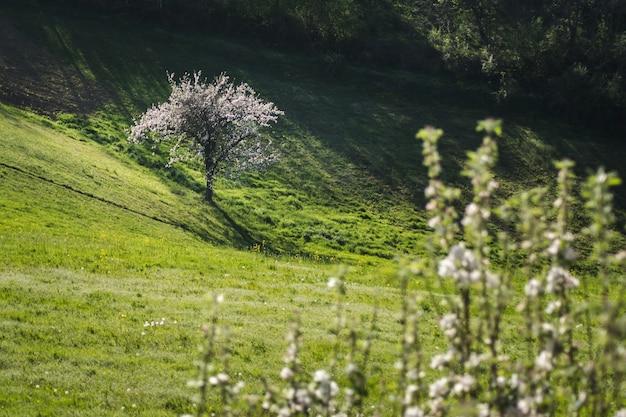 Prachtig uitzicht van een bloeiende boom in een open veld naast een heuvel vastgelegd op een zonnige dag Gratis Foto