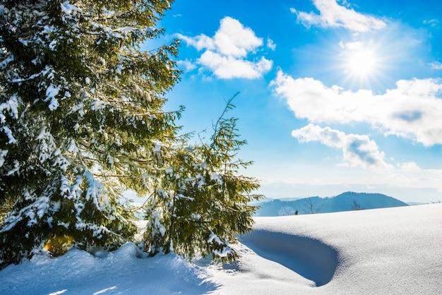 Prachtig uitzicht van majestueuze groene sparren die groeien op een heuvel in de winter sneeuwlaag tegen een blauwe lucht en witte wolken op een zonnige ijzige winterdag Premium Foto