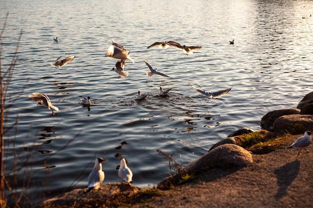 Prachtig uitzicht van vogels zwemmen en vliegen op de rivieroever Gratis Foto