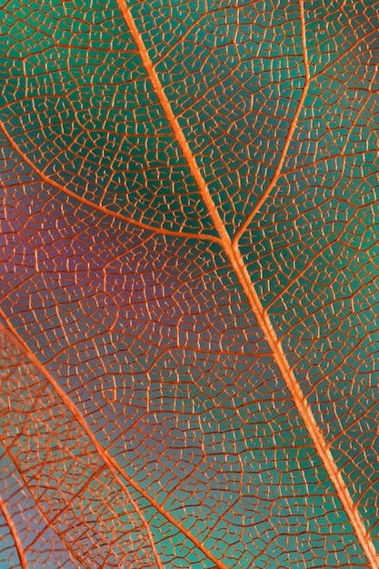 Prachtige abstracte herfstbladeren met oranje aderen Gratis Foto