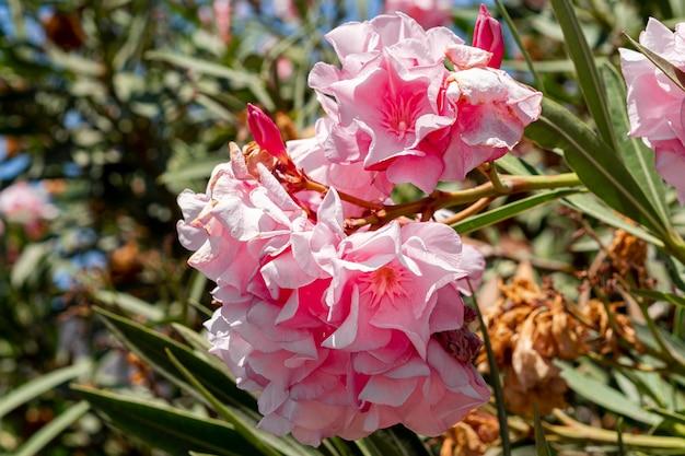 Prachtige exotische roze bloemen Gratis Foto