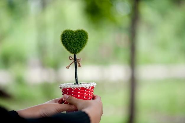 Prachtige groene hand en hart beelden valentijnsdag concept met kopie ruimte Premium Foto