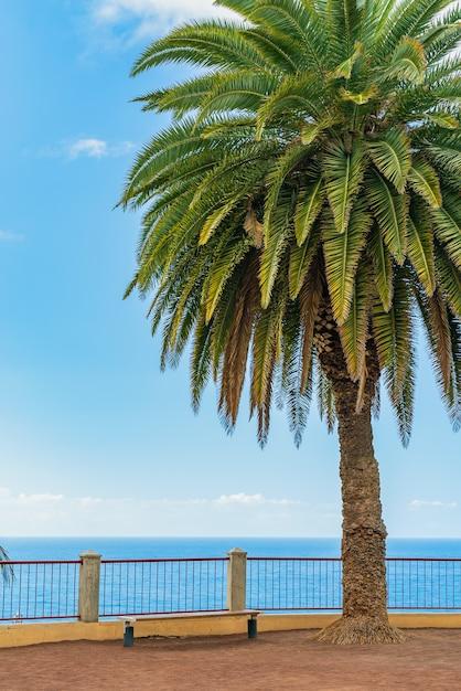 Prachtige groene palmboom op een klif tegen de blauwe zonnige hemelachtergrond. puerto de la cruz, tenerife, spanje Gratis Foto