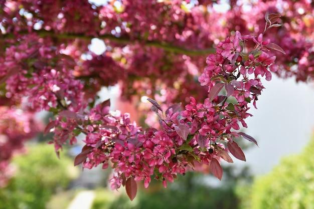 Prachtige lente bloeiende boom. Gratis Foto