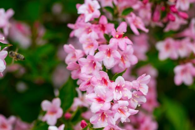 Prachtige natuurscène met bloeiende boom. Premium Foto