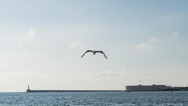 Prachtige oceaan landschap met zeemeeuw Gratis Foto